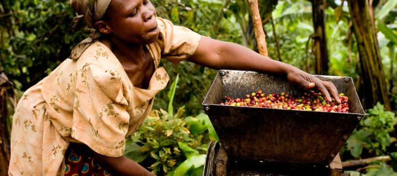 Coffee, tea farmers in East Africa face tough year