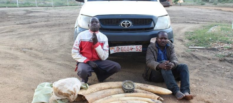 Pastor  in Amudat arrested Trafficking Shs20M worth Ivory On a Government car.