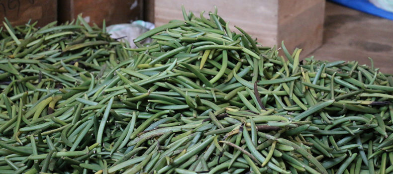 Ministry issues tough guidelines to vanilla farmers