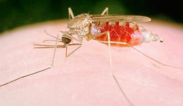 light at night suppresses biting in the Anopheles mosquito