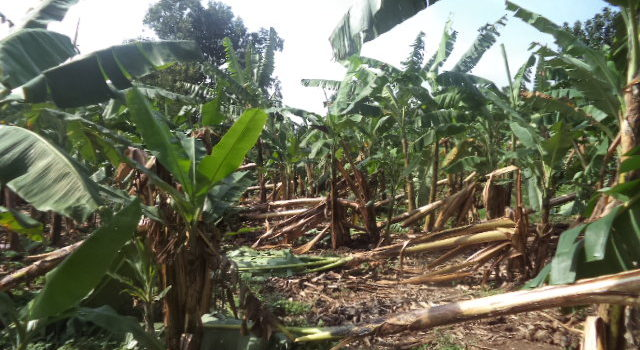 Hail Storms Destroy Property In Rukiri, Ibanda District.