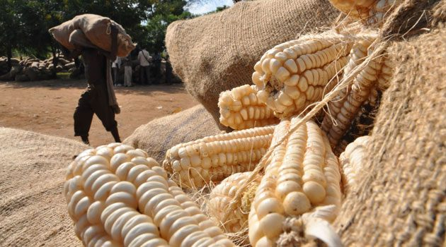 Kenya imports maize from Uganda as grain prices rise