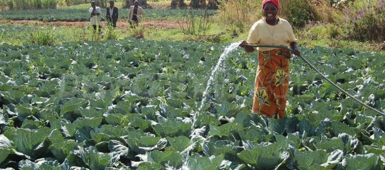 Farmers sensitized on the use of Irrigation