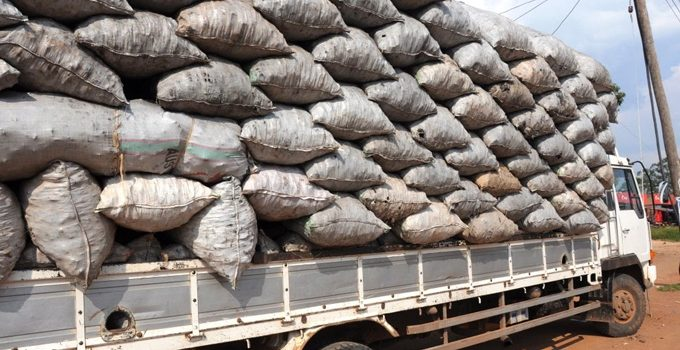 Gov't asked to minimize on charcoal export to neighboring countries