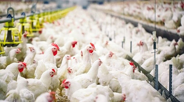 Deadly bird flu could spread worldwide because China is refusing to share samples of the virus