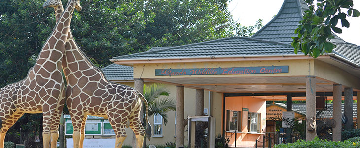 American tourist commits suicide at Entebbe Zoo