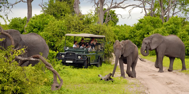 UWA Moves to restrain animals moving out of the park