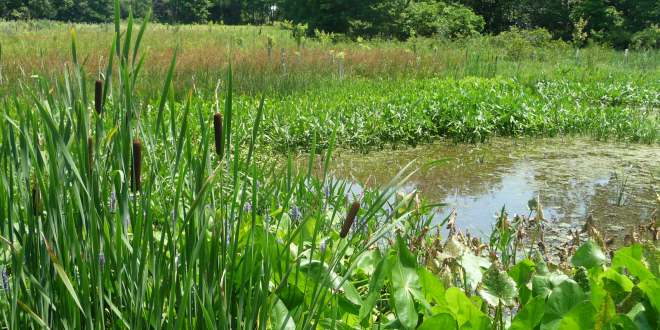 The Rukungiri Municipality Environment office issues eviction notices to eight wetland encroachers.