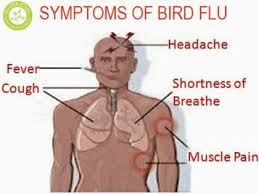 BIRD FLU OUTBREAK: Ugandans urged to remain Vigilant
