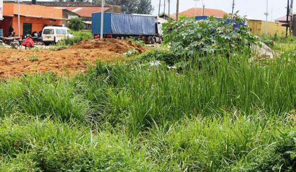 Fort Poral Authorities Struggle to Save Wetlands As Encroachent Escalates