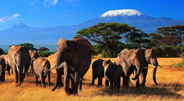 Kasese Farmers Count Losses as Elephants Destroy Crops