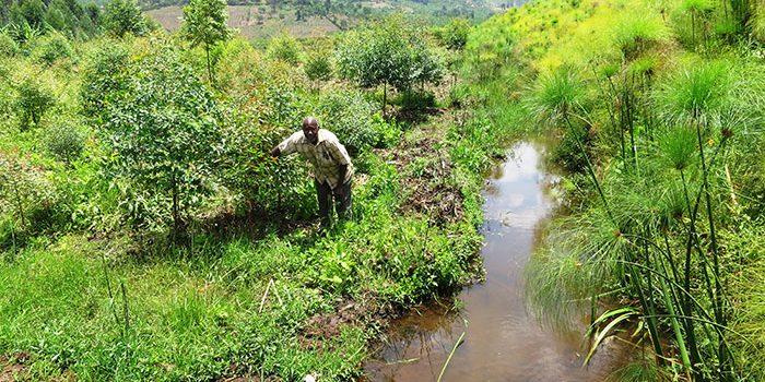 Conservation of River Rwizi catchment area registers success