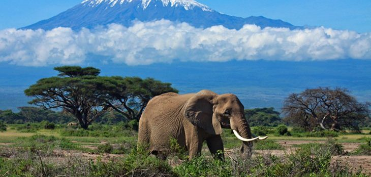 Tanzania launches tourism marketing drive in China.