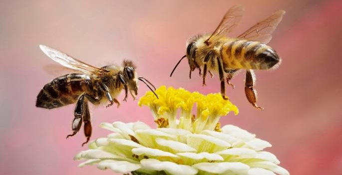 World faces hunger as Plant fertilising insects face extinction