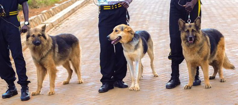 Kagadi District  receives Police sniffer Dogs.