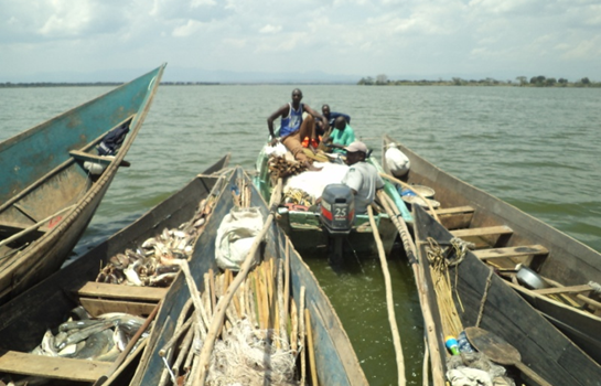 Investigations into  Rwenshama landing site and Rwenshama Fishing Company limited begins.