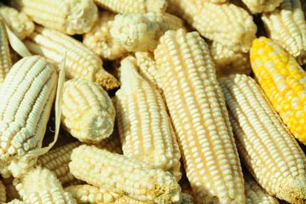 Maize prices in Kenya  fall after release of emergency grains.