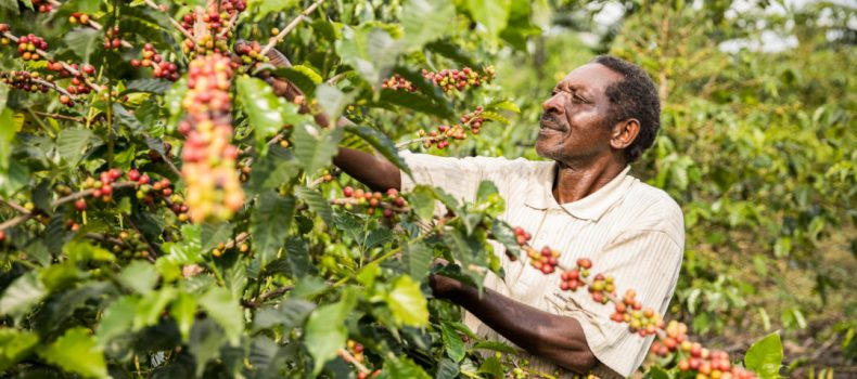 President Kaguta Museveni says NO to coffee farmers registration and licensing.