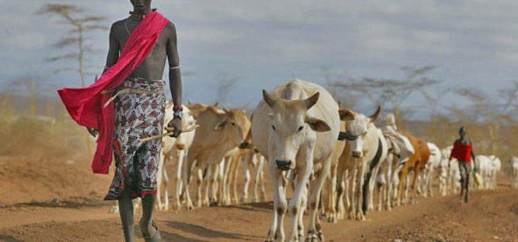 Northern Uganda Leaders in Mbarara,Kiruhura for lessons on ending Nomadism.