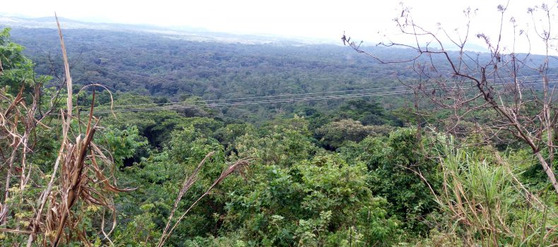 Conservationists decry activities threatening Echuya forest in Kigezi.