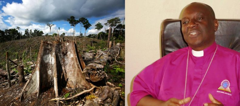 Kigezi Bishop cautions people against environmental degradation.
