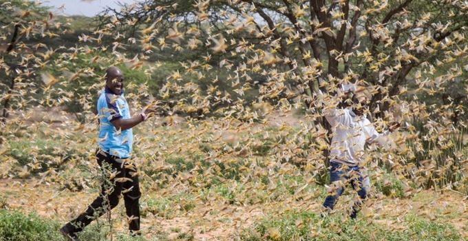 UN calls for international intervention as Locusts threaten East Africa.