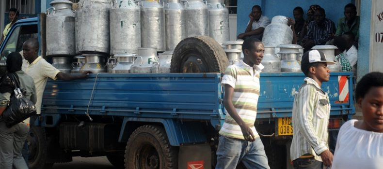 Farmers in Kabale are stranded following the drop of milk prices.