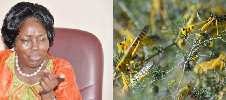 Speaker Rebecca Kadaga orders for arrest of locusts in Parliament.