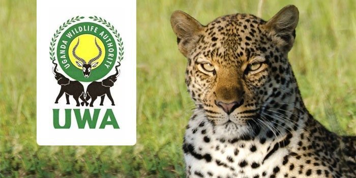 Uganda wild Life Authority suspends tourists in the protected areas due to (COVID-19).