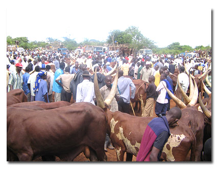 Govt closes all livestock markets countrywide over COVID-19.
