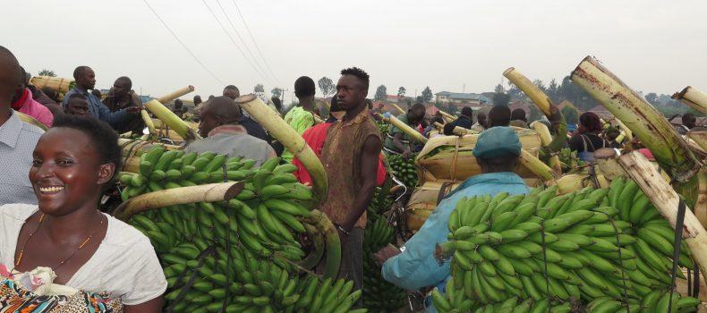 9 Matooke markets Closed in Ntungamo