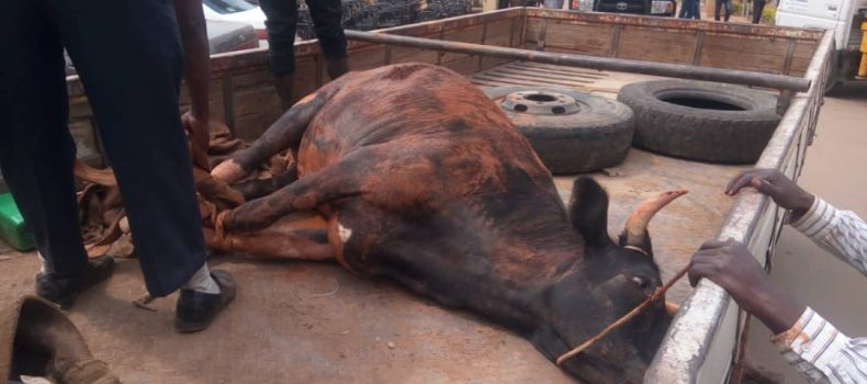 Stolen cow recovered by police in Mbarara