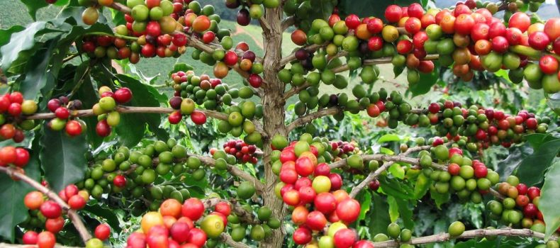 Parliament Passes National Coffee Bill