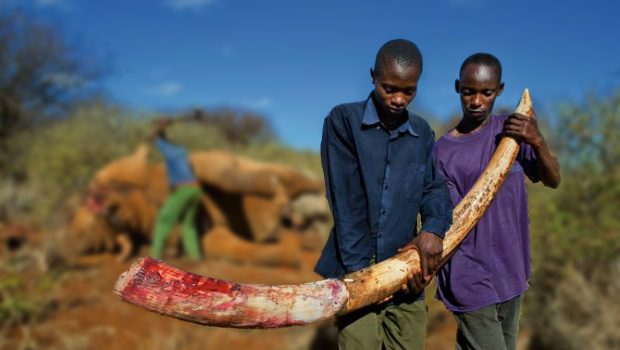5 Arrested for Notorious Poaching