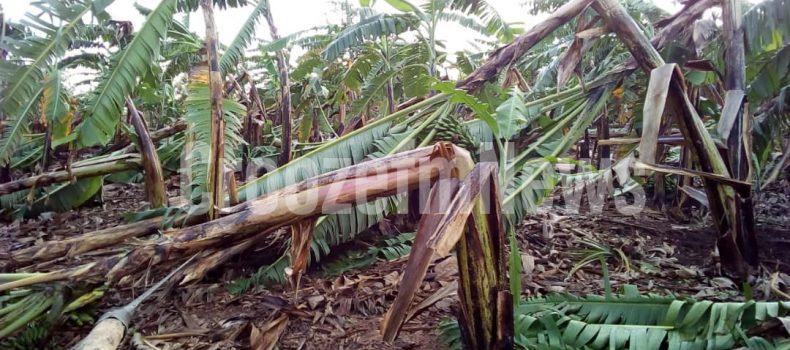 Hailstorm Leaves Rwampara Residents Helpless