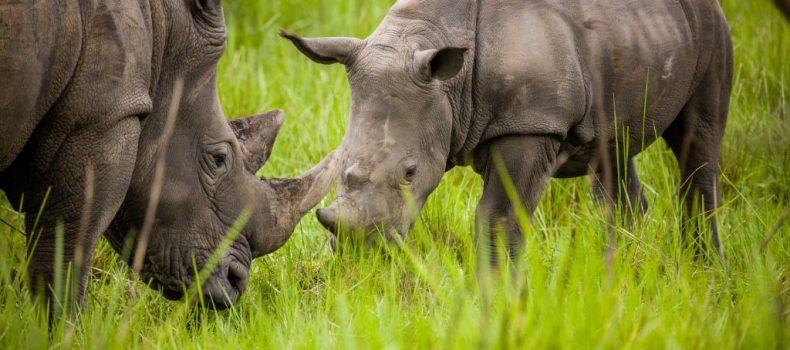 28 arrested as Ziwa Rhino Sanctuary land wrangle deepens